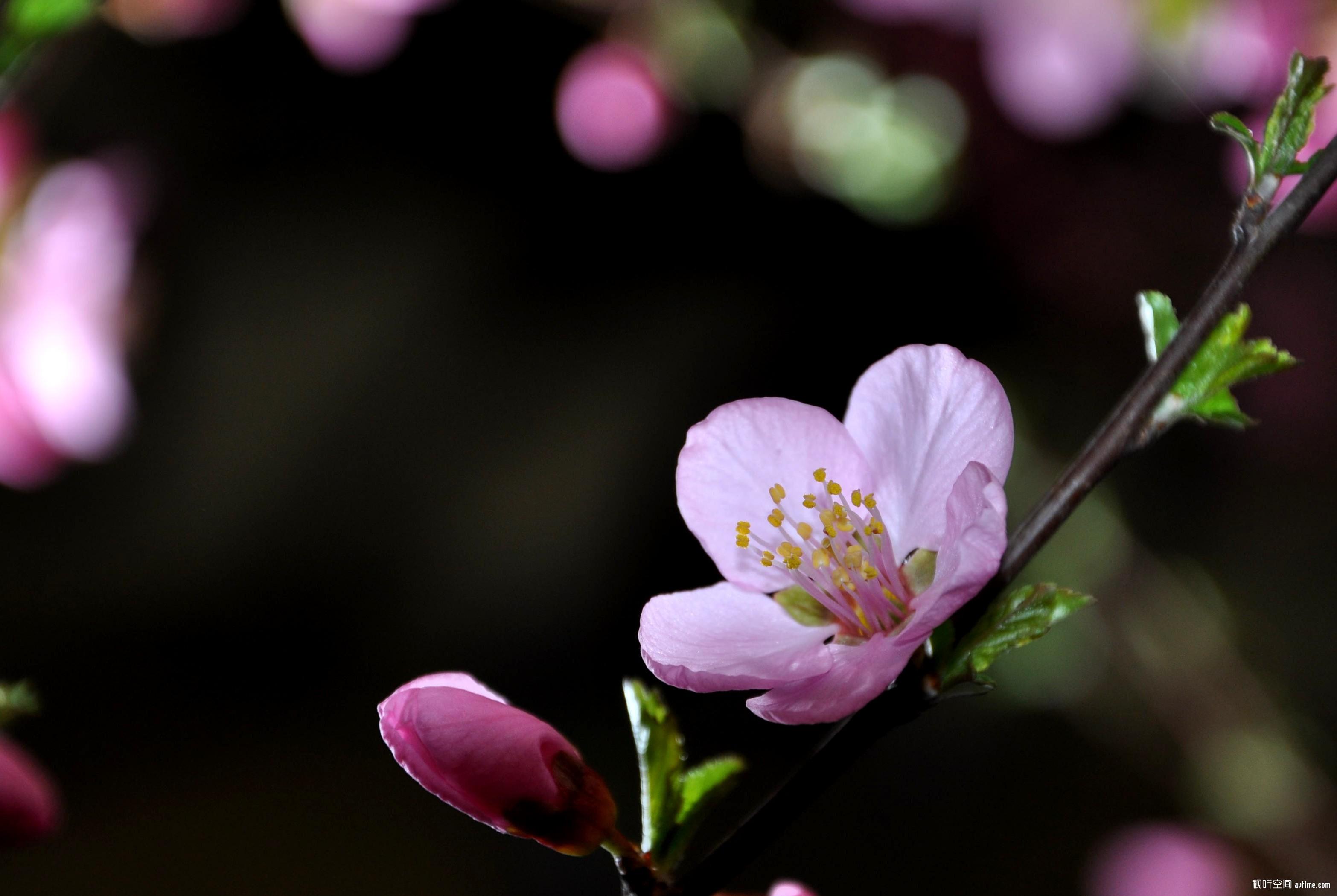 花卉,蝴蝶,风景 摄影及旅游 Powered Discuz