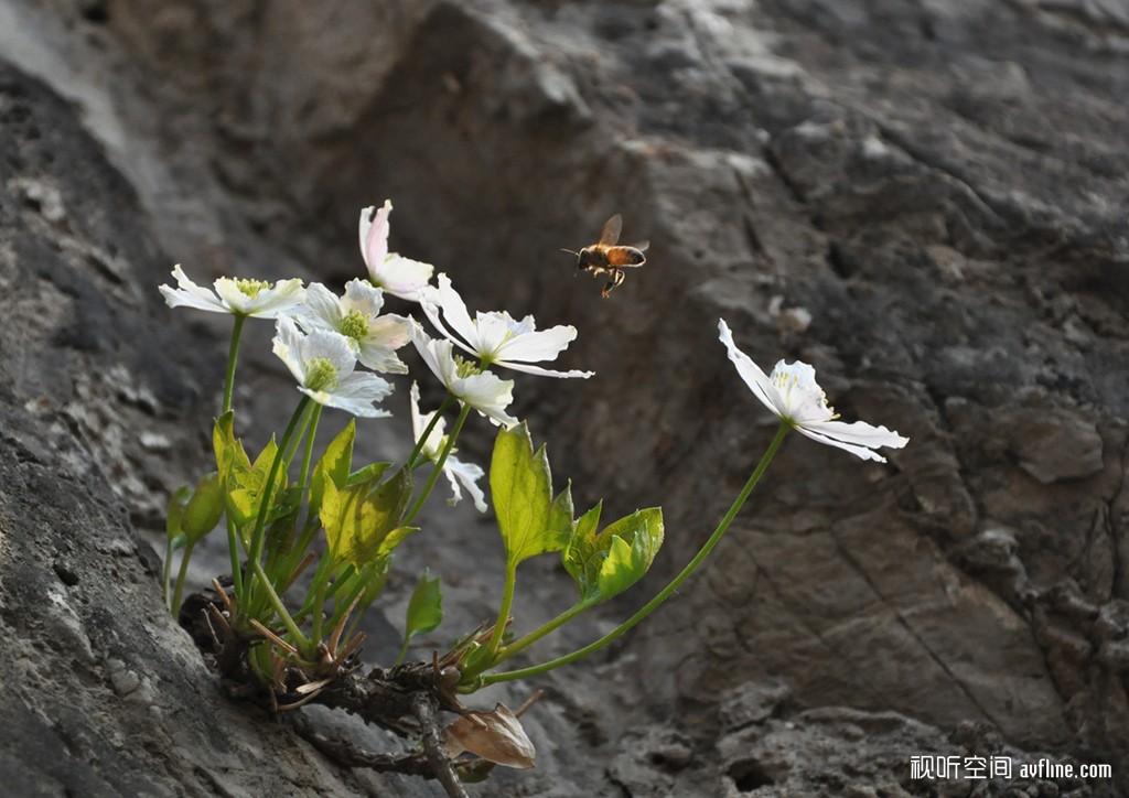 花卉,蝴蝶,风景
